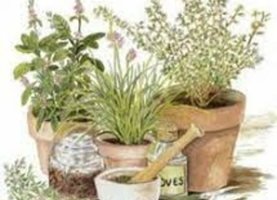 LIVE PLANTS (PICK UP ONLY) Available April-June - REMAINING FINAL CLEARANCE @ 49¢