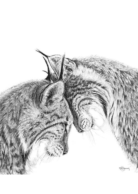 Le Nid Illustration 8 x 10 Lynx