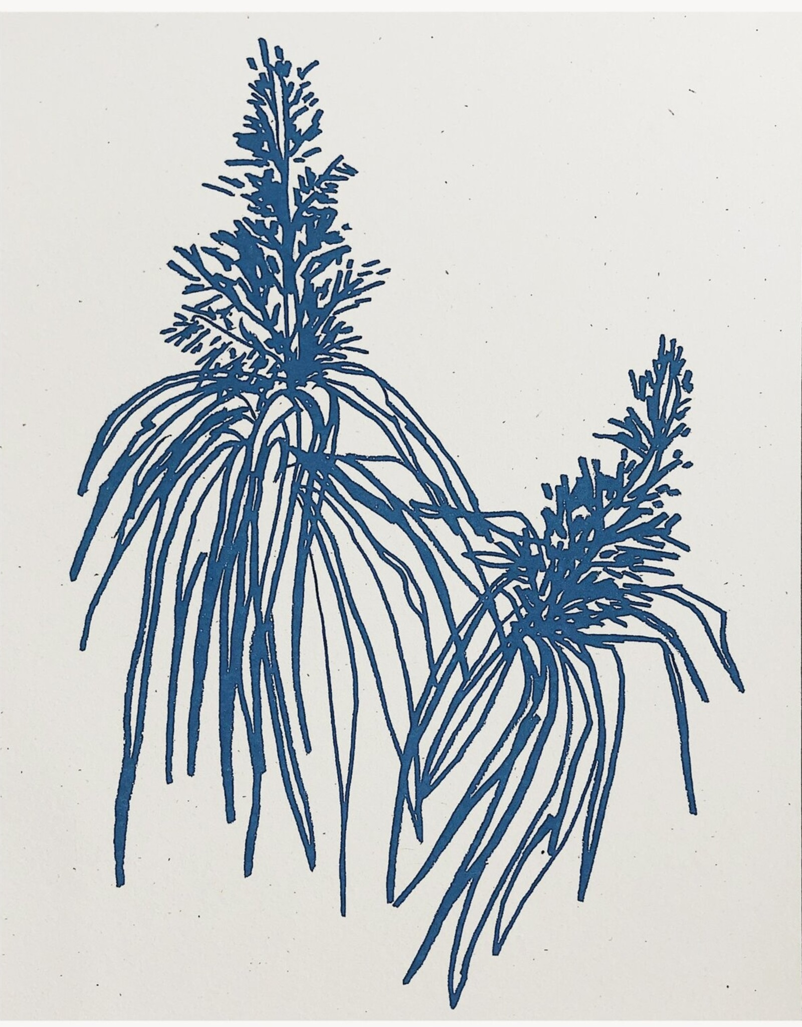 Wilde House Paper Botanical Art Print