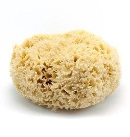"Natural Wool Sea Sponge 5-5.5"""