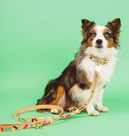 Nice Digs Nice Digs | Confetti Dog Leash