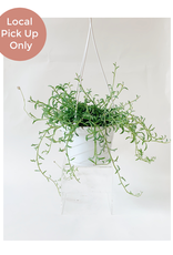 """Lady Pruner 6"""" String of Dolphins (Hanging)"""