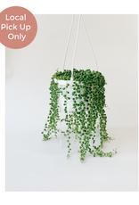 "Lady Pruner 6"" String of Pearls (Hanging)"