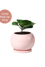 "Potey 5"" Pink Round Pot with Saucer"