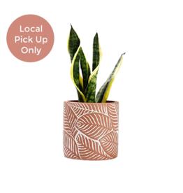 "Potey 4.8"" Terracotta Leaf Cement Pot"