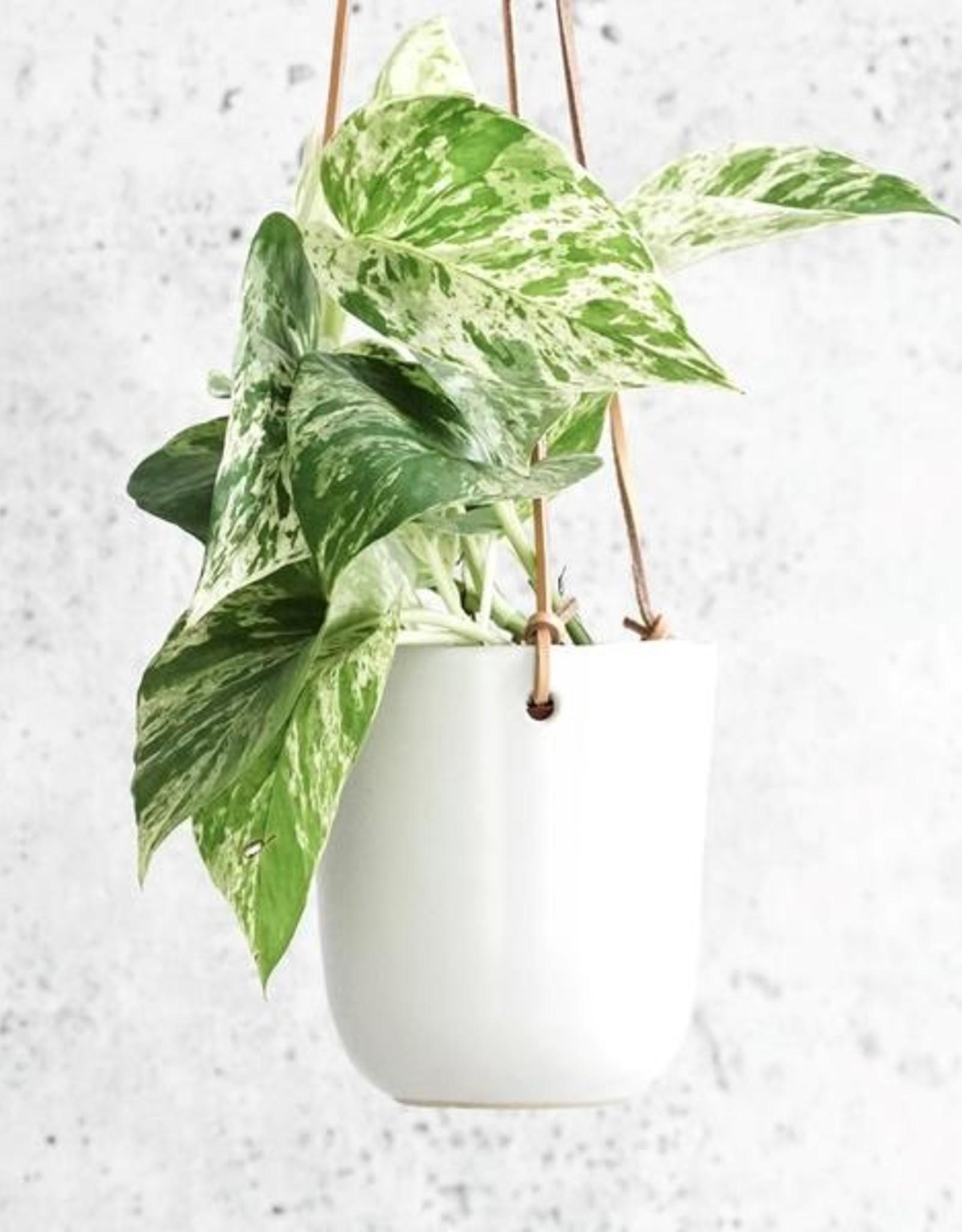 "4.75"" Doni Hanging Plant Pot"