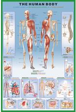 Affiche sur le corps humain