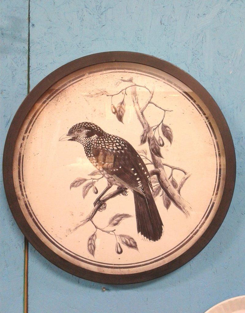 Woodbridge Store Bird Portrait