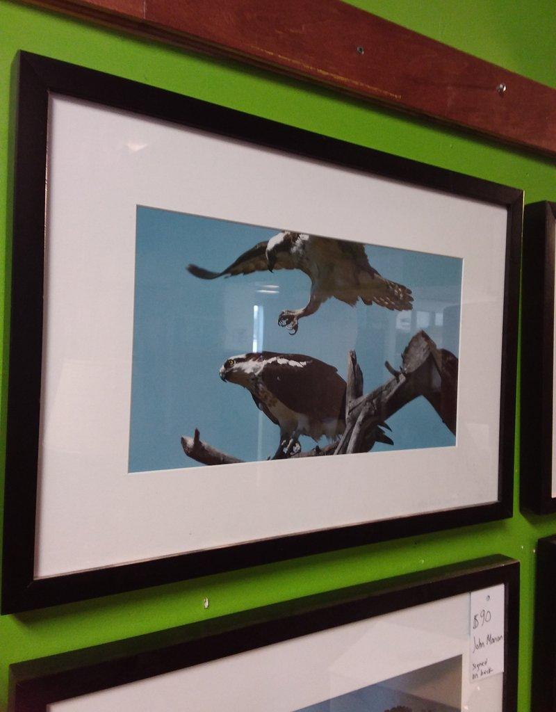 Etobicoke Store Photograph Hawks