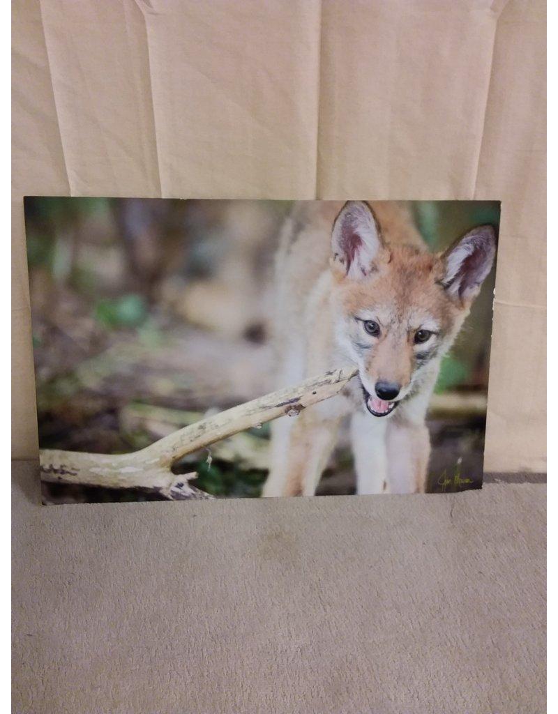 "Vaughan Signed John Marion Photo ""A Fox"""