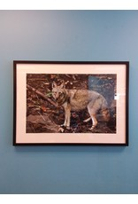 Vaughan John Marion's Framed Photography - Wolf