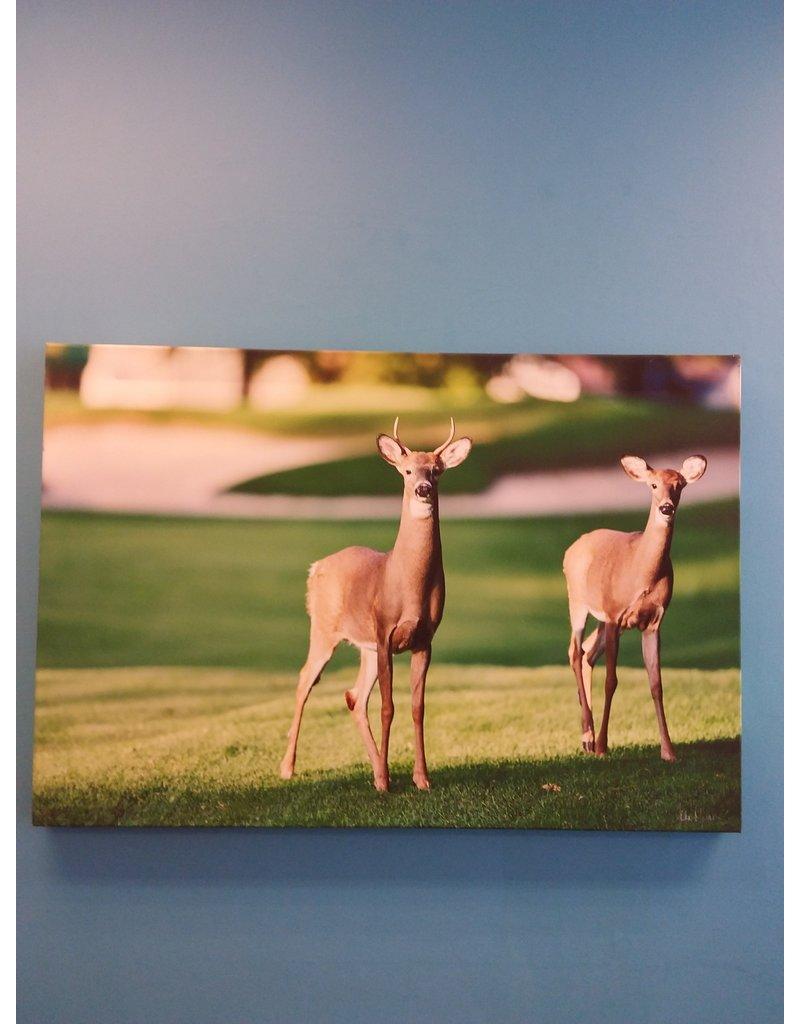 Vaughan Doe & Deer - Signed by John Marion