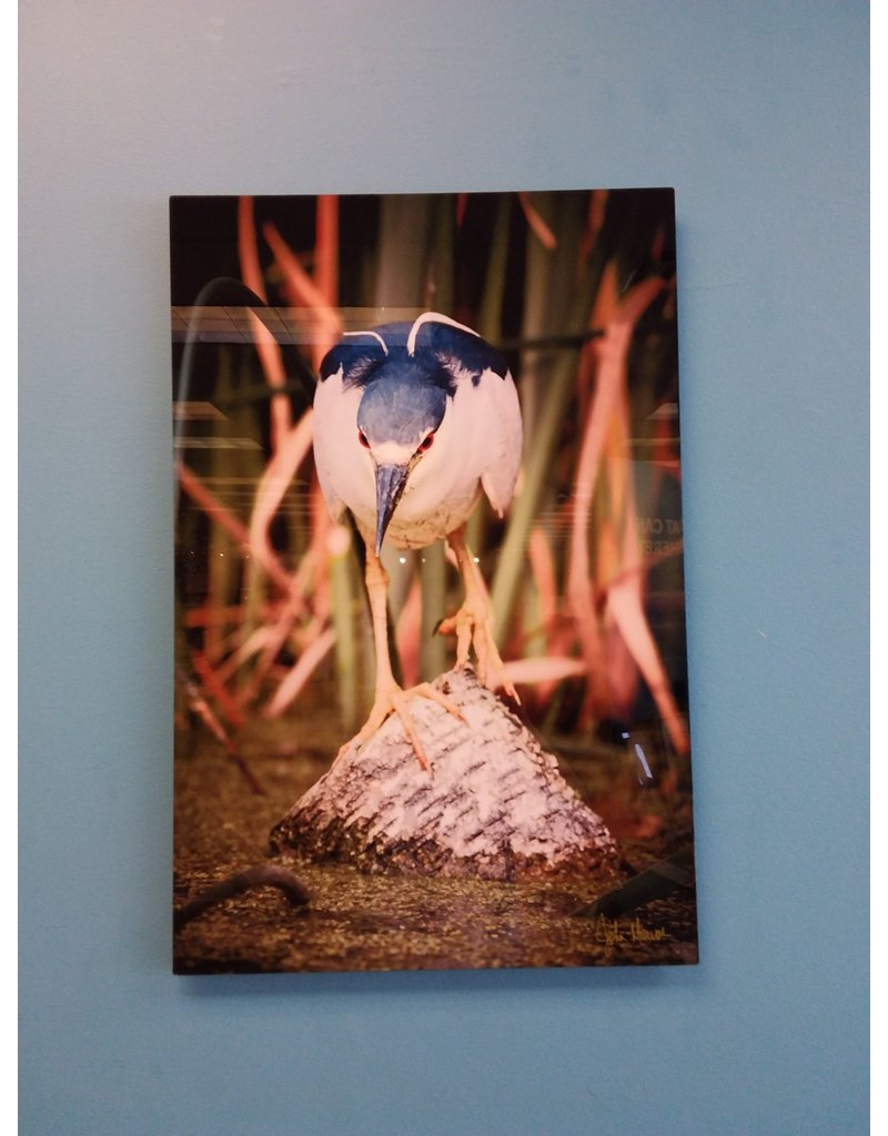 Vaughan Blue Bird - Signed by John Marion