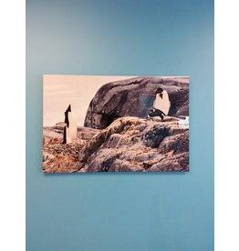 Vaughan Signed John Marion photograph - 3 Penguins I