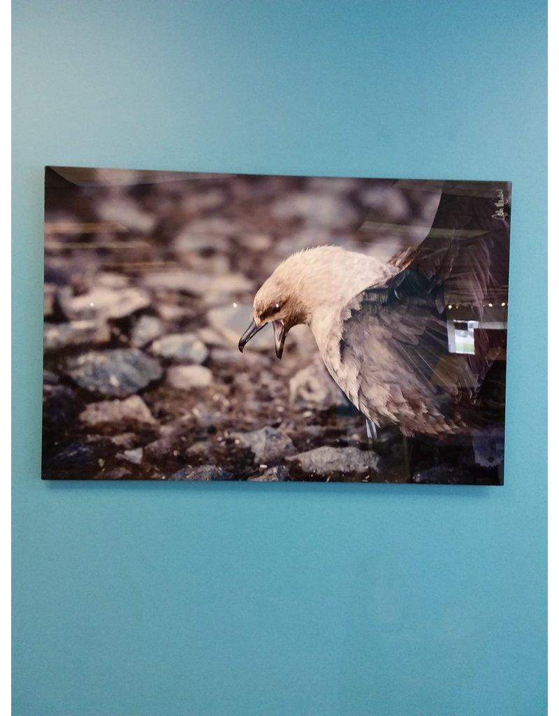 Vaughan Signed John Marion Photograph - A Hawk