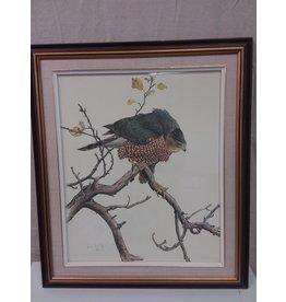 North York Signed art print Hawk