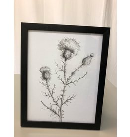 Scarborough Prickly Flower Sketches
