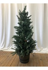 Scarborough Decorative Spruce Tree