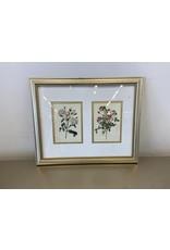 Etobicoke Print Flowers