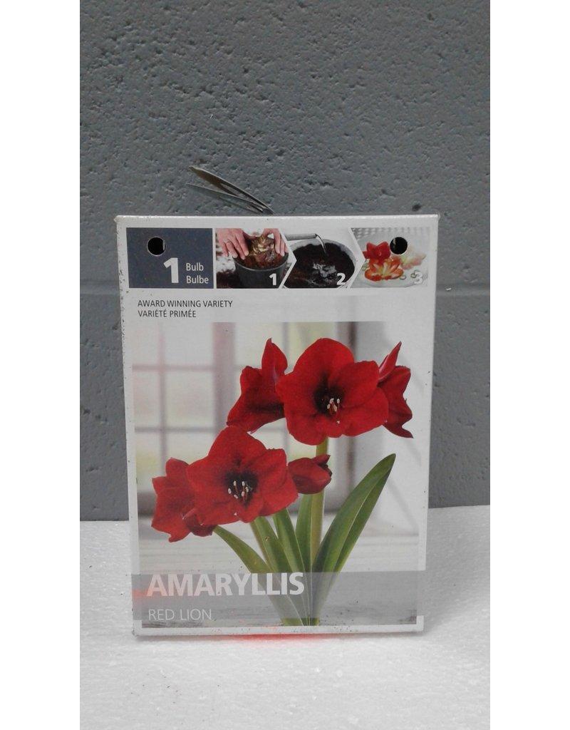 Brampton Amaryllis (Red) Bulb with Pot