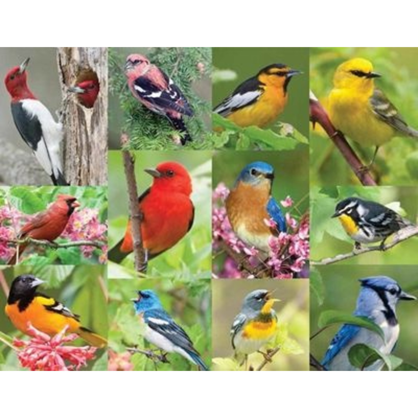 Birds Of A Feather 36 PC
