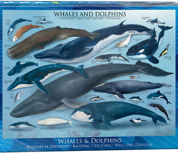 Whales & Dolphins 1000pc Puzzle