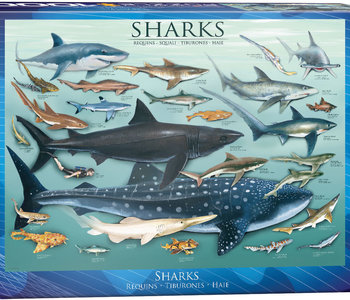 Sharks 1000pc Puzzle
