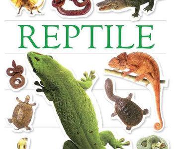 Reptile Ultimate Sticker Book