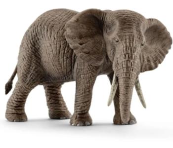 African Elephant female