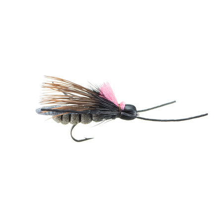 Rogue River Skwalla | Dry Fly | Black | #10
