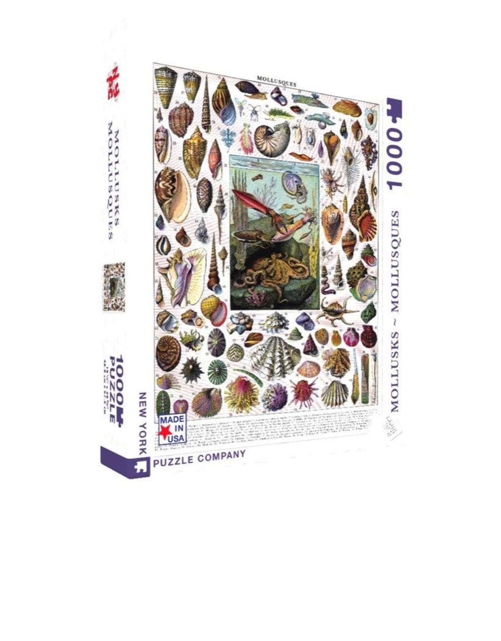 NLE - Mollusks Puzzle / 1000pcs