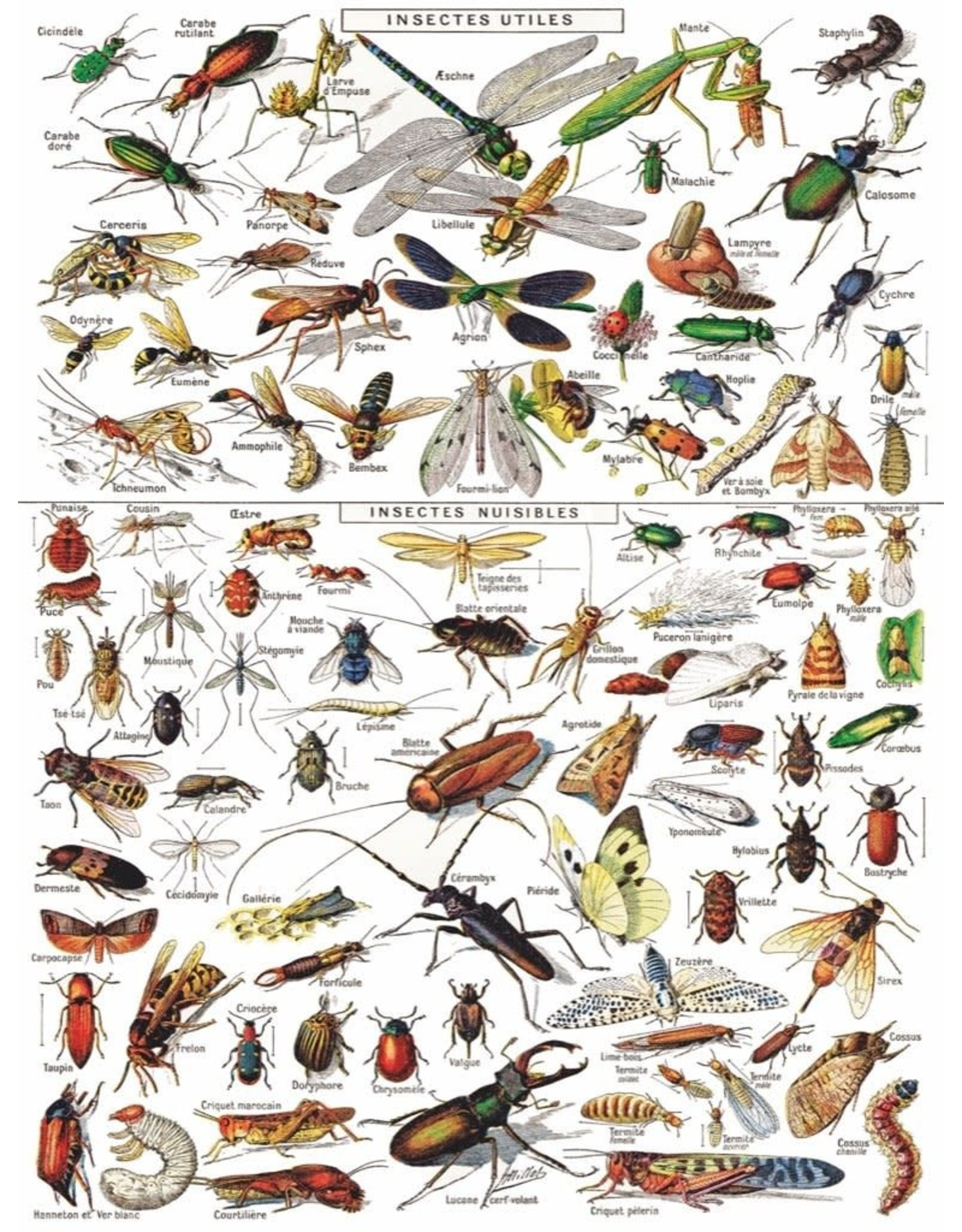 NLE - Puzzle Insects / 1000pcs