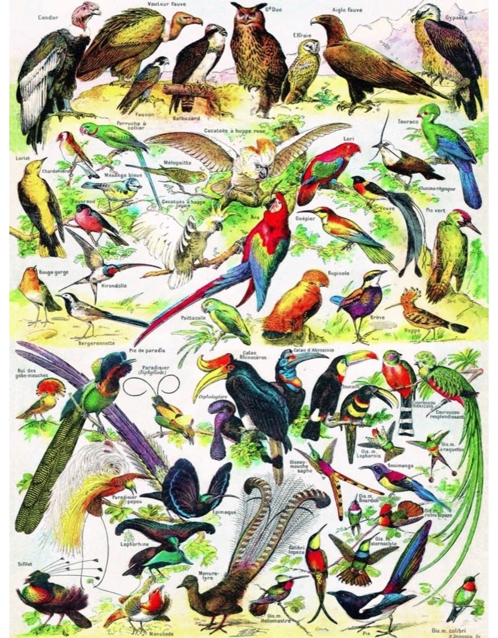 NLE - Birds Puzzle / 1000pcs