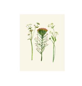 "Briana Corr Scott - Print/Protea 11 x 14"""