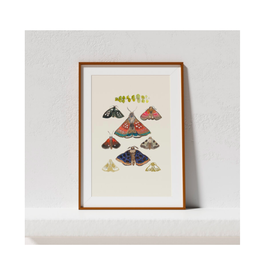 Briana Corr Scott -Print/Moths, Cream, 11 x 14""