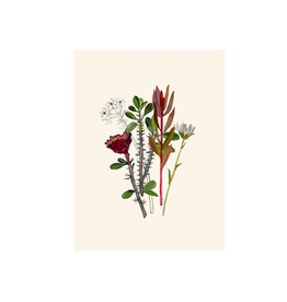 """Briana Corr Scott - Print/Botanical, 8 x 10"""""""