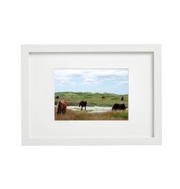 "Aleyah Solomon - Photo Print/Family Gathering Sable Horses, 8 x 10"""