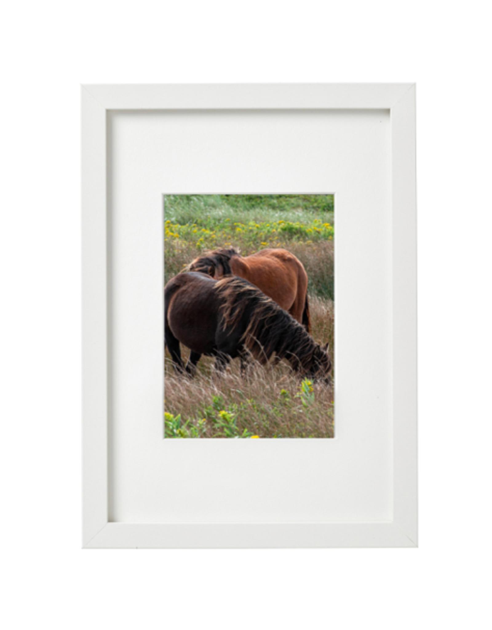 "Aleyah Solomon - Photo Print/Flowy Mane Sable Island 8 x 10"""