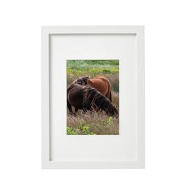 "Aleyah Solomon - Photo Print/Flowy Mane Sable Island, 8 x 10"""