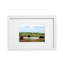 "Aleyah Solomon - Photo Print/Family Gathering Sable Horses, 11 x 14"""
