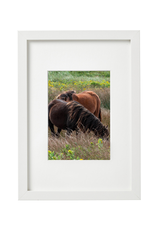"Aleyah Solomon - Photo Print/Flowy Mane Sable Horses 11 x 14"""
