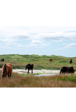 "Aleyah Solomon - Photo Print/Family Gathering Sable Horses 8x10"""