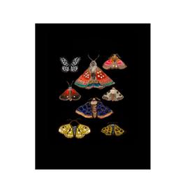 "Briana Corr Scott - Print/Moths, Black 11 x 14"""
