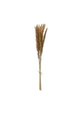 "COP - Dried Fountain Grass Bunch 25"""
