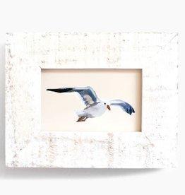 "Anne Tochka WS - Anne Tochka - Seagull No. 6 - 2""x3"""