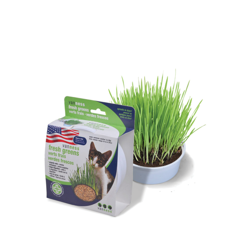 Vanness Oat Garden Cat Grass Kit