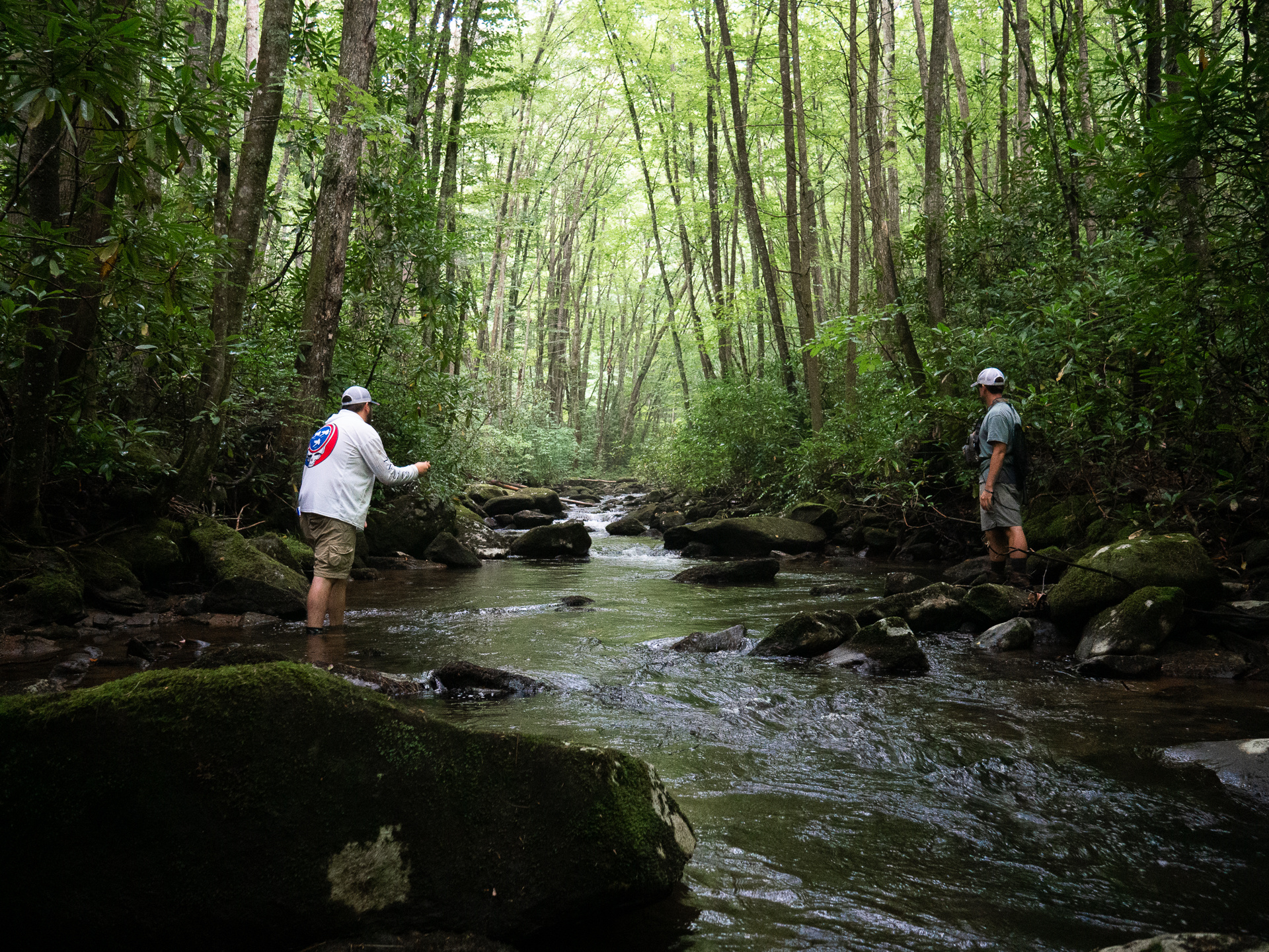 Five Facts about Fly Fishing Delayed Harvest In Tennessee