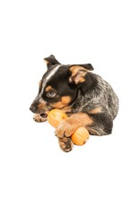 WESTPAW QWIZLE TREAT TOY SMALL