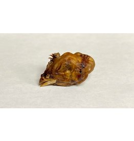 DEHYDRATED CHICKEN HEAD