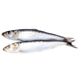 BIG COUNTRY RAW SARDINES 1LB